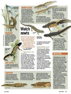 How to watch newts
