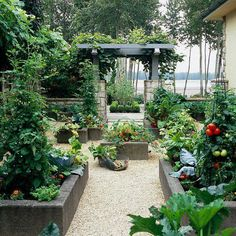 Formal-looking vegetable garden in raised beds