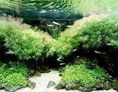 Het Nature style aquarium