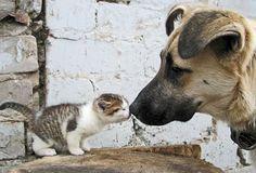 Big-doggy-little-kitty-Best-friends