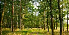 Výsledek obrázku pro stromy obrázky