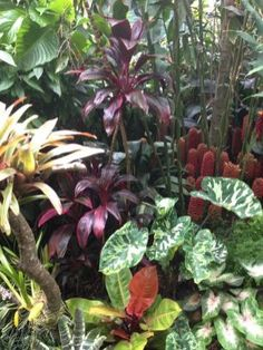 The Ultimate Revelation Of Tropical Landscaping 25 - Garden Deko Tropical Backyard Landscaping, Tropical Garden Design, Landscaping With Rocks, Tropical Decor, Tropical Plants, Landscaping Ideas, Tropical Gardens, Backyard Patio, Bougainvillea Trellis