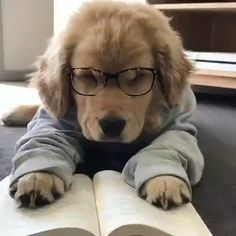 Life's ruff being a smart puppy 🤓🐶 – - Welpen Cute Dogs And Puppies, Baby Dogs, I Love Dogs, Puppies Puppies, Doggies, Cute Animals Puppies, Mastiff Puppies, Funny Puppies, Retriever Puppies