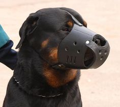 colorful pictures of rotties | Padded leather Rottweiler muzzle – m51 | Rottweiler-dog-breed-info