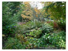 plants native to idaho - Google Search