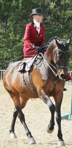 Beautiful turnout of both horse and rider, a stunning horse and a lovely happy lady. Can any Side saddle ladies supply name of horse and rider?