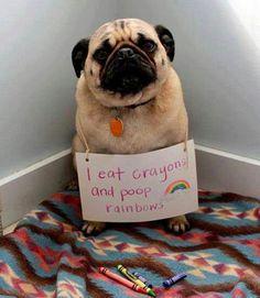 Colorful dog shame