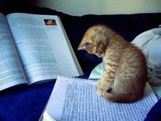 """""""Let me see.... quite good, but you have to spell it purr-so-na-li-ty!"""""""