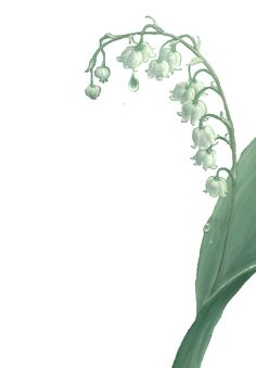 Lily of the valley, Lilies and Tattoos and body art on Pinterest