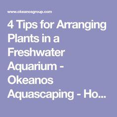 4 Tips for Arranging Plants in a Freshwater Aquarium - Okeanos Aquascaping - How to Arrange Plants in a Planted Aquarium