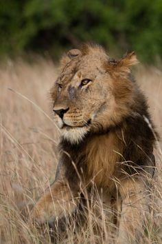 Experiential tourism allowed us to get close to the majestic Ugandan lions in Queen Elizabeth National Park. Click here to find out more!