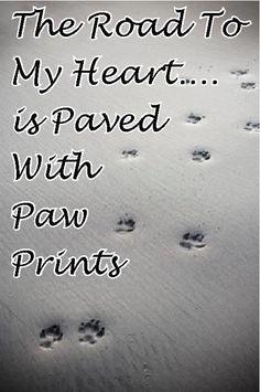 Paw Prints ♥