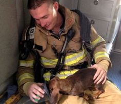 This fireman rescued a dachshund and gave it oxygen. What a champ.