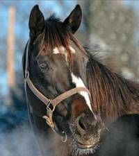 Serena's Cat by Storm Cat out of Serena's Tune by Mr. Prospector. Stakes winner. Dam of graded stakes winner Noble Tune and multiple grade 1 winner and older male champion Honor Code.