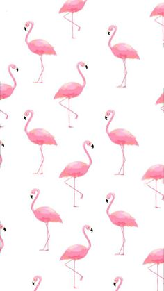 Check out this awesome post: Wallpaper flamenco (flamingo) Flamingo Wallpaper, Flamingo Art, Summer Wallpaper, Animal Wallpaper, Pink Wallpaper, Screen Wallpaper, Mobile Wallpaper, Pattern Wallpaper, Handy Wallpaper