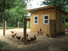 8 x 12 large chicken coop