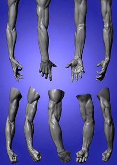 Book Figure Sculpting Volume I: Planes & Construction Techniques in Clay by Philippe Faraut Zbrush Anatomy, Arm Anatomy, Anatomy Poses, Muscle Anatomy, Anatomy Study, Body Anatomy, Anatomy Drawing, Anatomy Art, Human Anatomy