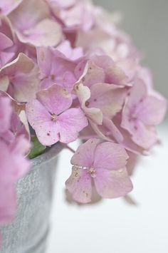 lilac hydrangea is a gorgeous flower in bloom in the summer months. Perfect for a summer wedding bouquet
