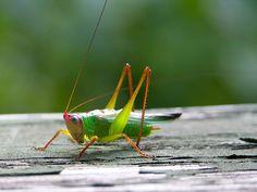 Grasshopper visites me today