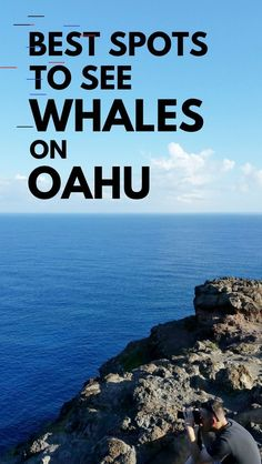 Oahu Hawaii travel tips. whale watching in oahu. see whales. best things to do in oahu. cheap free on a budget. Oahu Hawaii, Hawaii Travel, Hawaii Beach, Beach Travel, Hawaii Life, Visit Hawaii, Mexico Travel, Maui, Oahu Vacation
