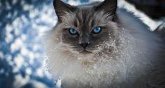 Dusty by Sabrina Blaßnig Cat Names, Here Kitty Kitty, Winter Wonderland, My Best Friend, Pets, Pictures, Animals, Spice, Snow