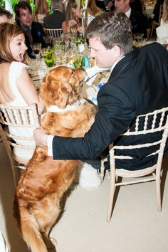 The family's golden retriever, Woosy, joins dinner—and tries to steal the groom's napkin.
