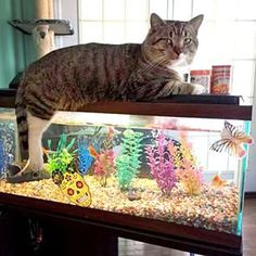"""I'm just guarding them until you get back."" 