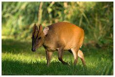 Always has something going on. Kangaroo, Beds, Trust, Wildlife, Animals, Baby Bjorn, Animales, Animaux, Animal
