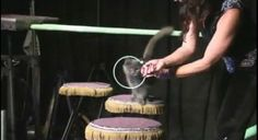 Acro-Cats Bring Kitty Hijinks to San Francisco -- Fur Real - The Exhibitionist