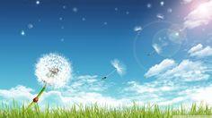 Ladybug on a dandelion wallpaper, Ladybug on a dandelion Digital Art HD desktop wallpaper Dandelion Wallpaper, Frühling Wallpaper, Spring Wallpaper, Wallpaper Backgrounds, Bright Wallpaper, Wallpaper Gallery, Laptop Wallpaper, Desktop Background Nature, Facebook Background