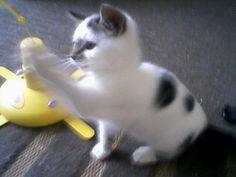 Hi 5 everyone #catsprotection #adoptacat #darlington www.wearvalley.cats.org.uk