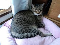 Today's cat on 28th May 2012 by ganchan2, via Flickr