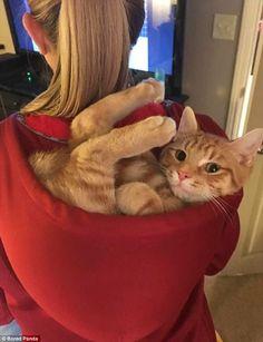 Cat in da hood