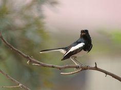 Bird Sanctuaries in Assam, India @ Sanctuariesindia.com