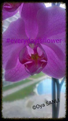 This flower has heart.. #everydayisflower +hergunbircicek