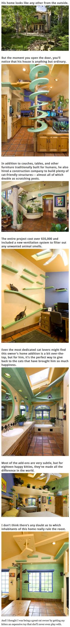 A man with 18 cats decided to turn his home into a feline paradise, adding in colorful ramps, walkways and tunnels for the animals to play on. The unidentified cat lover, whose house is located in Goleta, California, spent a whopping $35,000 on the renovation, which included the addition of a spiral walkway, tiny stairs to leading to various kitty ledges and climbing polls that double as scratching posts. More importantly, he also installed a new ventilation system to ensure that the air is…