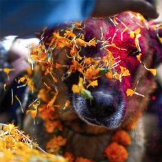 Nepal Festival  - kukur-tihar