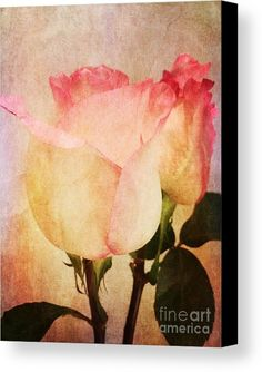 Rosas Canvas Print by Onedayoneimage Photography.    roses, pink, flowers, aged, rosas, weathered, cracked, petals, textured, texture, romance, romantic, dainty, soft, abstract flowers, pastel, pink pastel, floral, nature, tinted, painterly, cracked, romantic decor, pink roses, home decor, office decor, canvas, canvas print,