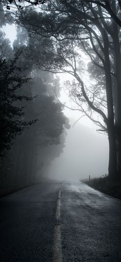 gray road in between trees in grayscale photograph... iPhone 11 Wallpapers