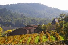 Languedoc, French wines with terroir, character and personality #wine #france #wineeducation