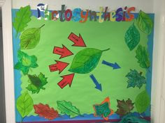 Science (Plants) - Photosynthesis