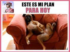 Y el mio ... #memes #chistes #chistesmalos #imagenesgraciosas #humor www.megamemeces.c... ➫➫➫ http://www.diverint.com/imagenes-humor-cosas-casas