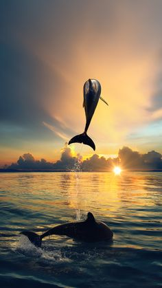 ↑↑TAP AND GET THE FREE APP! Art Creative Sky Nature Sea Water Sky Dolphin Summer Vacation HD iPhone 6 Plus Wallpaper
