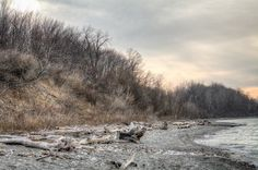 Lake Erie Bluffs - driftwood on natural beach- looking west