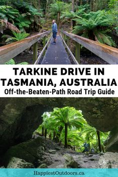 Take an Off-the-Beaten-Path road trip on the Tarkine Drive in Tasmania, Australia. This remote road trip goes through the north west corner of the state to old growth forests and remote coastline. It's the traditional land of the Tarkiner indigenous people and is full of their history and culture. It is currently under threat from logging and mining, but eco-tourism is growing. Road trip Tasmania. Tarkine region, Tasmania. #Tarkine #Tasmania #RoadTrip #Australia