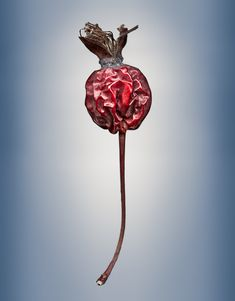 Svjetlana Tepavcevic Visual Artist: Means of Reproductions Series - Gallery of Color Pigment Images, Prints of Seeds and Seed Pods