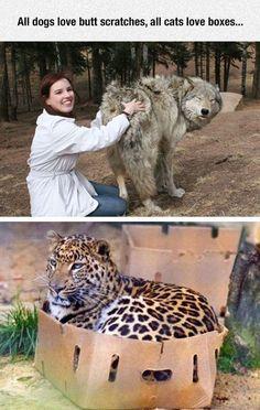 Universal Animal Truth: