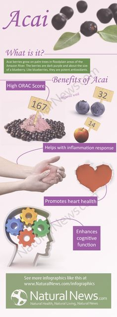 Benefits of Acai - increases cognitive function, antioxidants, helps with inflammation