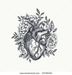 Arte vectorial  Anatomical heart  vector vintage style detailed