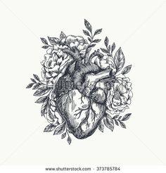 Anatomical heart   Shutterstock